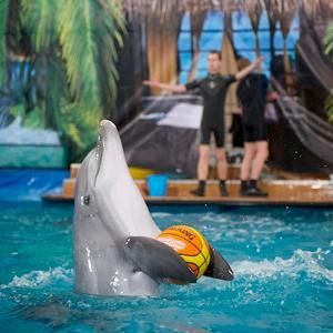 Дельфинарии, океанариумы Бутурлиновки