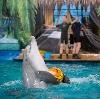 Дельфинарии, океанариумы в Бутурлиновке