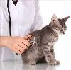 Ветеринарные клиники в Бутурлиновке